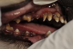 犬の乳歯遺残